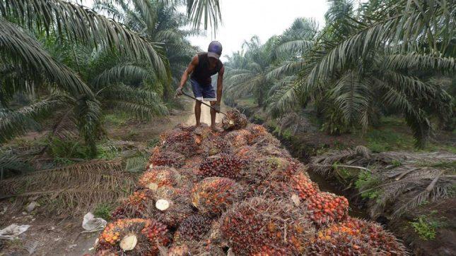 Malaysia perlu guna teknologi untuk tingkatkan hasil dan selamatkan hutan