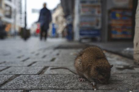 Lelaki maut oleh hantavirus di China