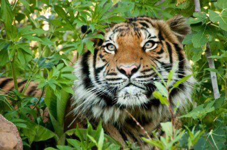 Mahkamah di Malaysia kuatkuasakan undang-undang ketat terhadap pemburu haram