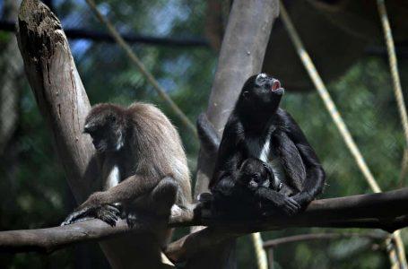 Covid, Kuarantin antara nama yang dicadangkan untuk haiwan baru lahir di sebuah zoo di Colombia