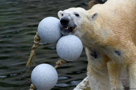 Zoo di Jerman pertimbang untuk korbankan haiwan, alami krisis kewangan