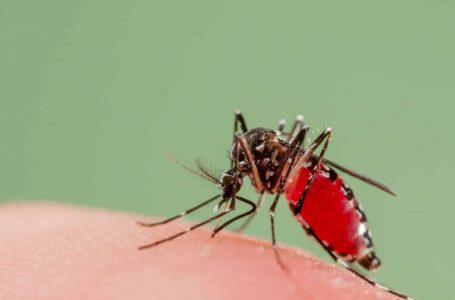 407 kes malaria zoonotik dilapor di Sabah, kes berkurang sepanjang tempoh PKP