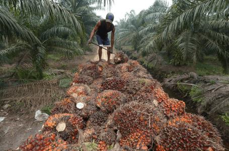 Projek minyak sawit sintetik, minyak sawit tulen Malaysia tidak terancam