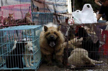 Shenzhen jadi bandar pertama di China larang makan daging kucing dan anjing
